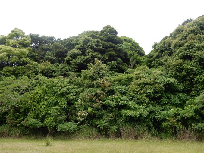 '16,5,26(木)挿し木で増やすのも面白いYO!_f0060461_14333210.jpg