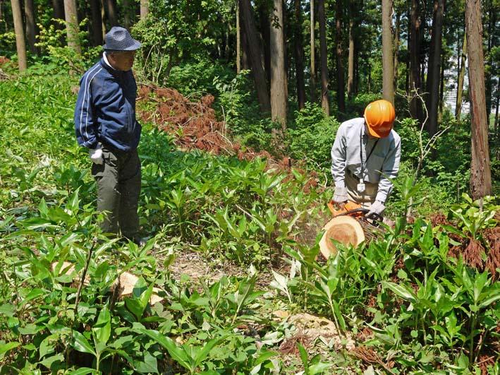 カジイチゴ完熟、食べごろに:六国見山の5月定例手入れ_c0014967_11201050.jpg