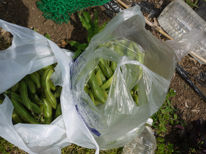 ニンジンとピーマンを初収穫、サツマイモ根付く5・24_c0014967_12184694.jpg