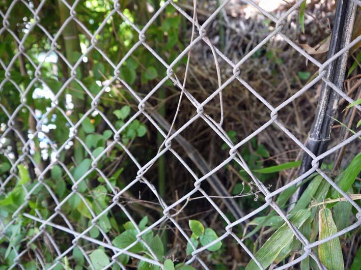 円覚寺結界「緑の洞門」の原形は残されていた!5・27 _c0014967_16583345.jpg