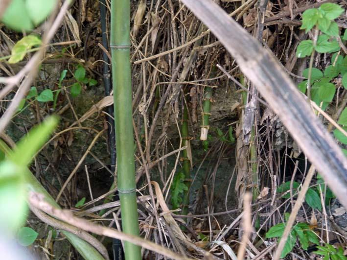 円覚寺結界「緑の洞門」の原形は残されていた!5・27 _c0014967_16585563.jpg