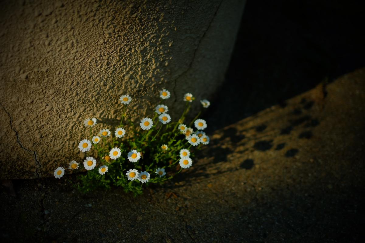 山田池公園_f0021869_21253052.jpg