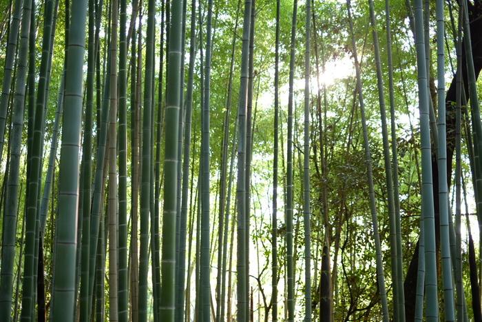 山田池公園_f0021869_21254221.jpg