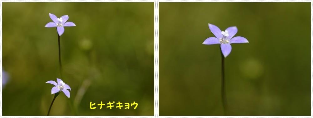 b0175688_00044492.jpg