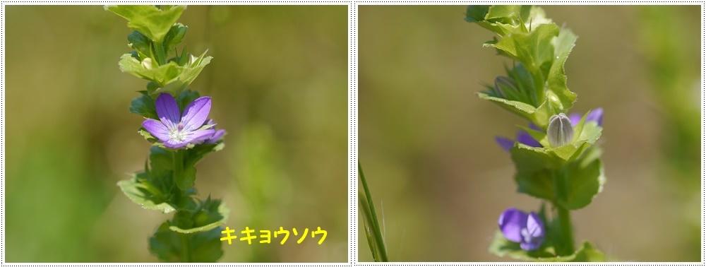 b0175688_00070307.jpg