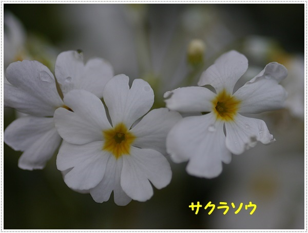 b0175688_00085063.jpg