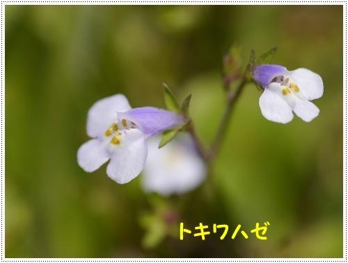 b0175688_00103743.jpg