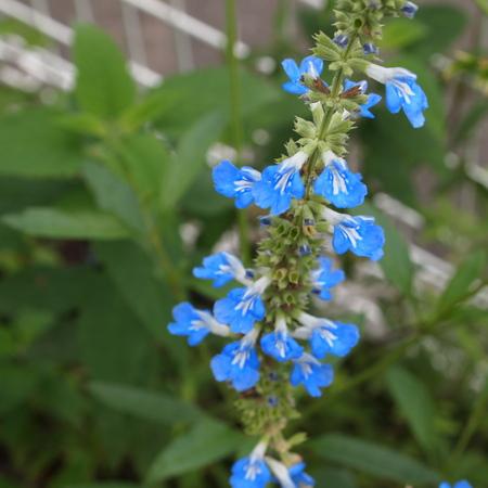 初夏から夏に向けての寄せ植え_a0292194_19295980.jpg