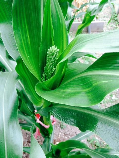 夏野菜植え付け_f0204295_20322375.jpg