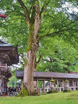 雨降りの毘沙門堂と観光者_c0336902_16233327.jpg