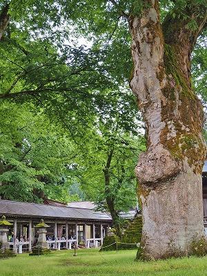 雨降りの毘沙門堂と観光者_c0336902_1623463.jpg