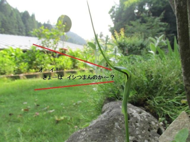 f0341616_16241351.jpg