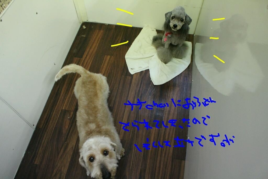 雨_b0130018_13165562.jpg