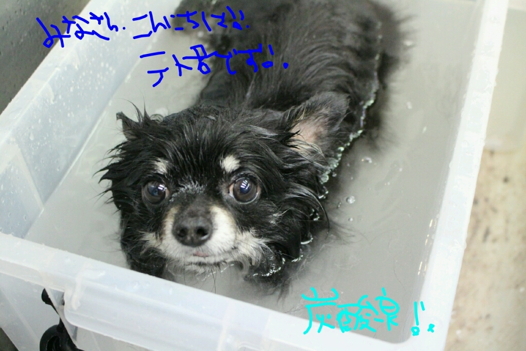 雨_b0130018_13223757.jpg