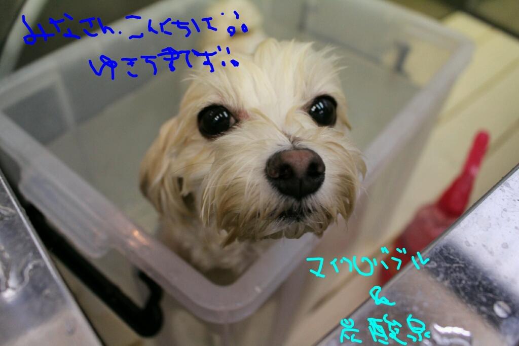 雨_b0130018_13520950.jpg