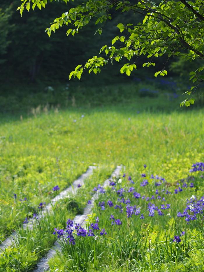 初夏の里山_e0169421_21525990.jpg