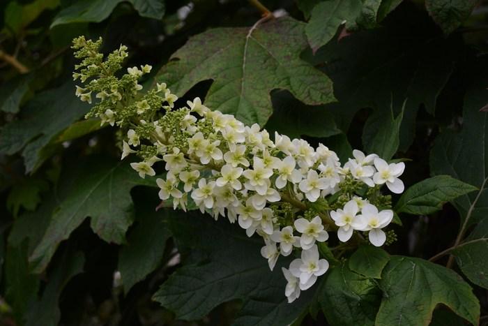 白い花・・_c0233349_22463768.jpg