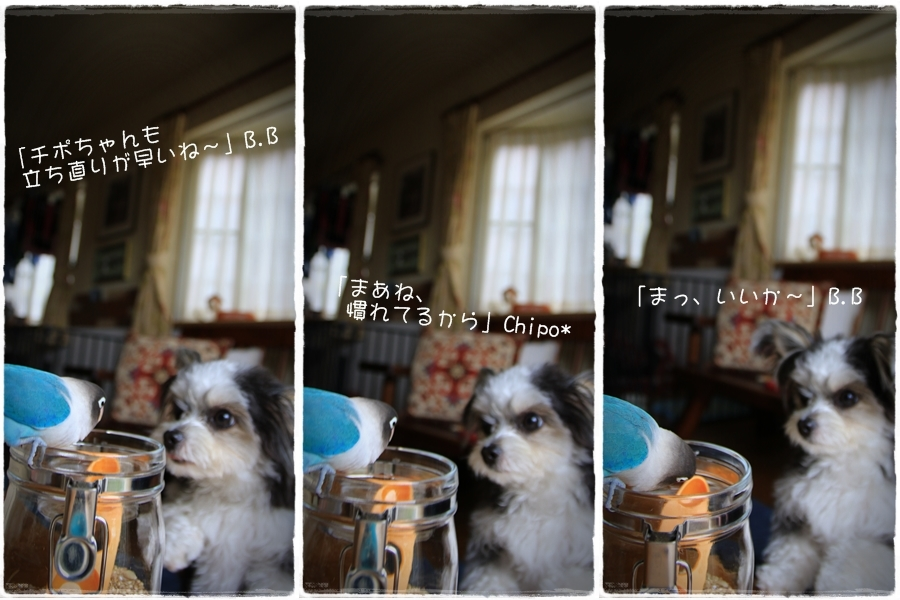c0145250_10183057.jpg