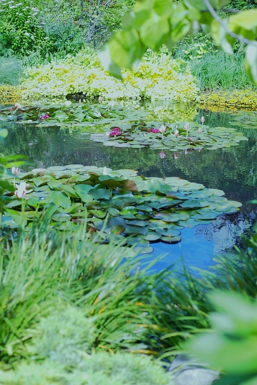 モネの庭_a0292060_11155725.jpg