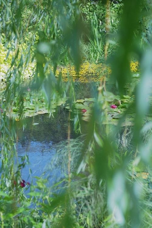 モネの庭_a0292060_11161710.jpg