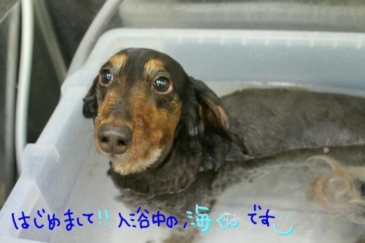 天ぷら_b0130018_00123897.jpg