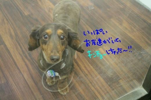 天ぷら_b0130018_00124854.jpg