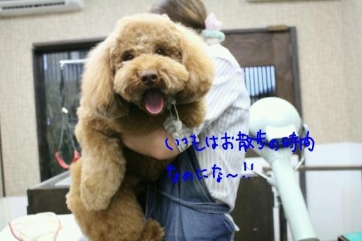天ぷら_b0130018_00180820.jpg