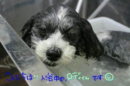 天ぷら_b0130018_00181245.jpg
