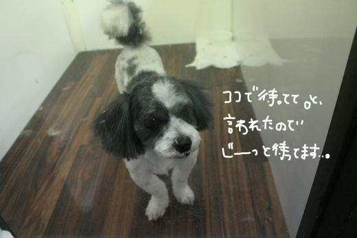 天ぷら_b0130018_00182977.jpg