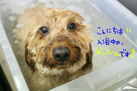 天ぷら_b0130018_00183328.jpg