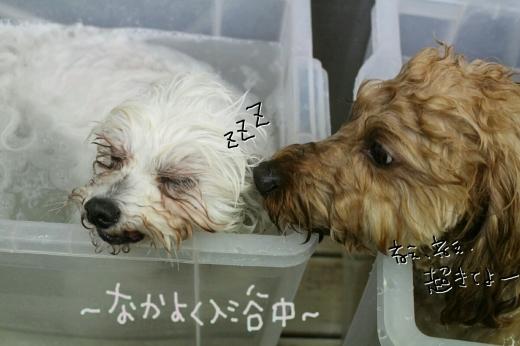 天ぷら_b0130018_00184040.jpg