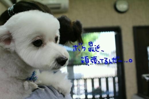 天ぷら_b0130018_20084653.jpg