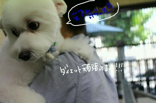 天ぷら_b0130018_20085299.jpg