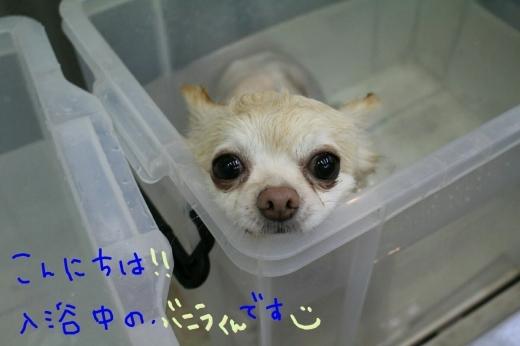 天ぷら_b0130018_20090727.jpg