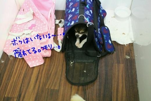 天ぷら_b0130018_20150950.jpg