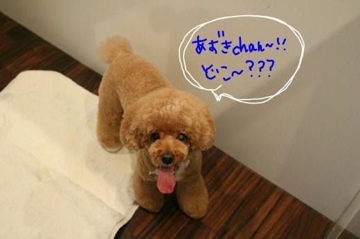天ぷら_b0130018_20245682.jpg