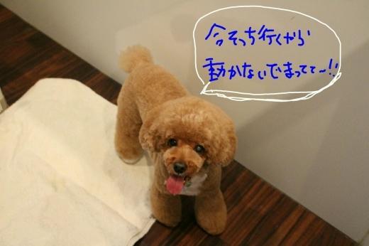 天ぷら_b0130018_20250316.jpg