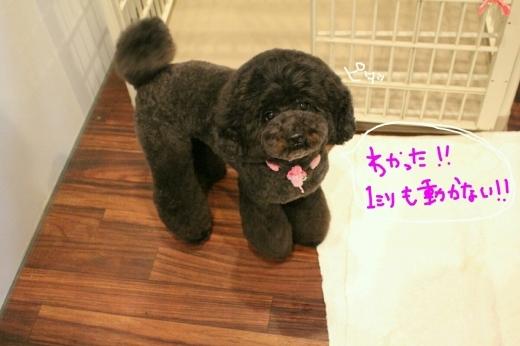 天ぷら_b0130018_20250790.jpg