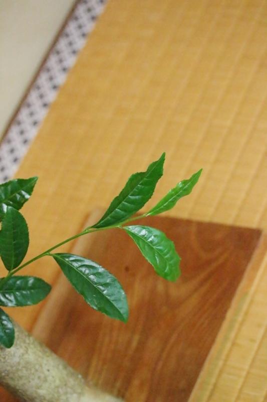 喜楽亭で楽しむ おいしい日本茶 5月_b0220318_08132613.jpg
