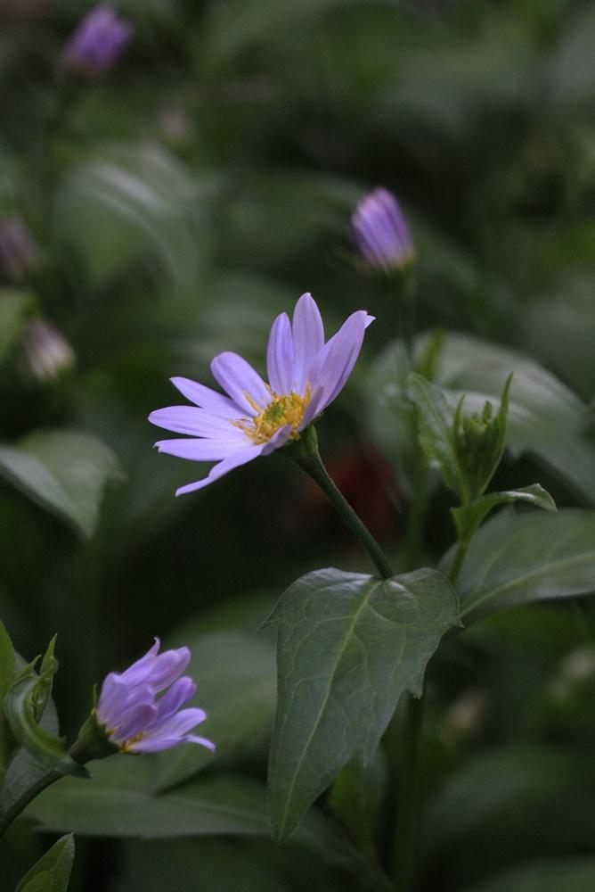 SL撮りに芝刈り_c0111229_18401856.jpg