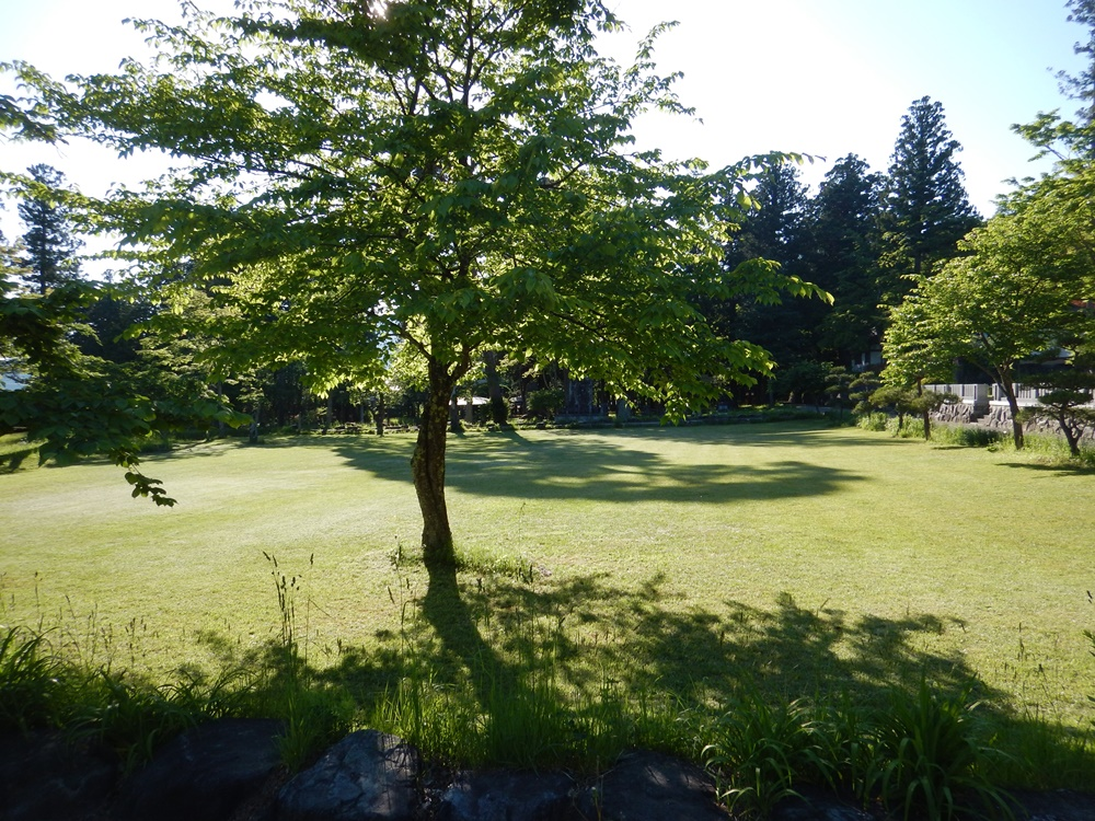 SL撮りに芝刈り_c0111229_1840194.jpg
