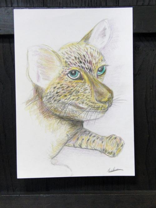 色鉛筆画 ~ 子豹 ~_e0222340_15581848.jpg