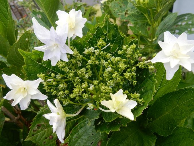 '16,5,28(土)野菜の苗と花の種!_f0060461_11234773.jpg