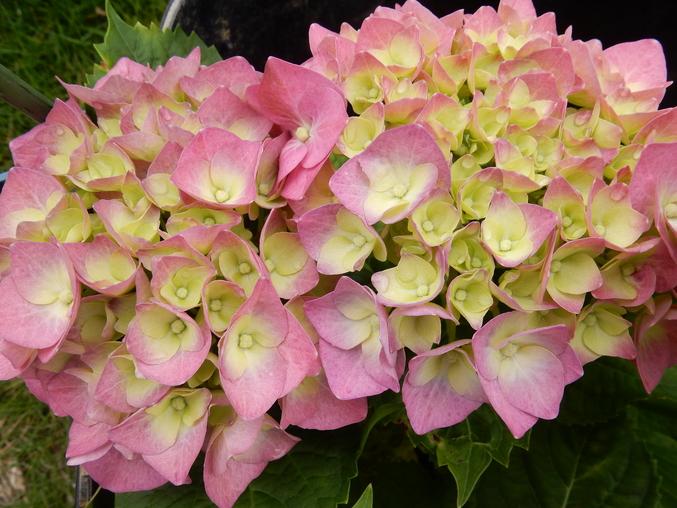 '16,5,28(土)野菜の苗と花の種!_f0060461_112582.jpg