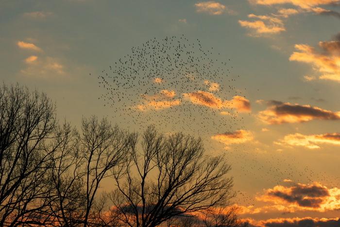 鳥だ_f0021869_120032.jpg