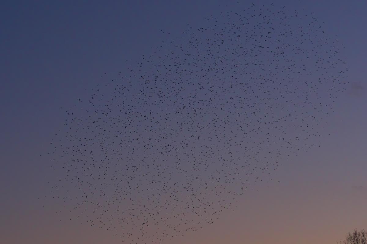 鳥だ_f0021869_1211193.jpg