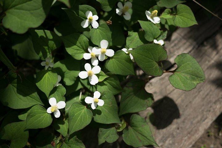 ひそやかに咲く白い花_d0353489_20182348.jpg