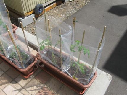 苗を植えました!_b0159098_111251.jpg