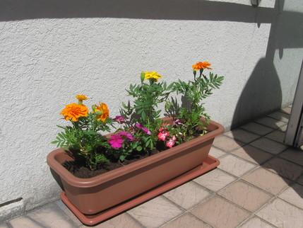 苗を植えました!_b0159098_1193034.jpg