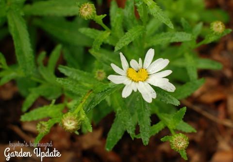 裏庭と花壇の様子(5月下旬)_b0253205_06541099.jpg